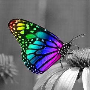 FreeSpirit® Veranstaltungen Schmetterling