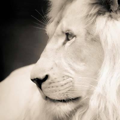 Bewusstseinstraining - Das Löwenbewusstsein